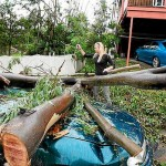 Thumbnail image for Brisbane Tree Lopping: The Law And You!