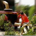 Thumbnail image for Tree Lopping In Your Local Brisbane Suburb.